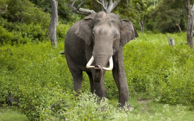 Help Ban EU Ivory Sales!