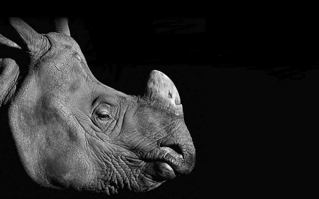 Catherine Bearder MEP Wildlife Trafficking Report